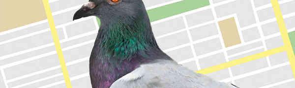 Perbaiki Hasil Pencarian Lokal, Google Luncurkan Alogaritma Google Pigeon